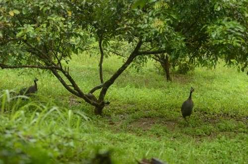 Murujan Permaculture Malaysia