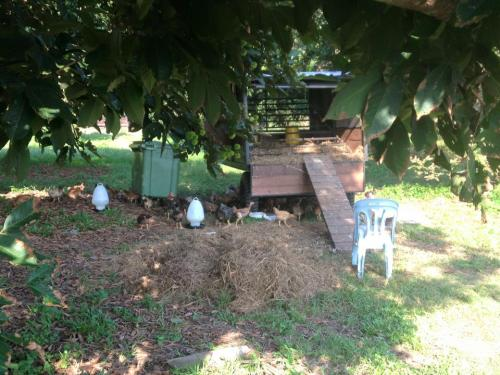 murujan tours taman permaculture chickens